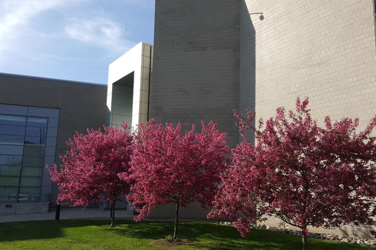 Auburn Hills in the springtime